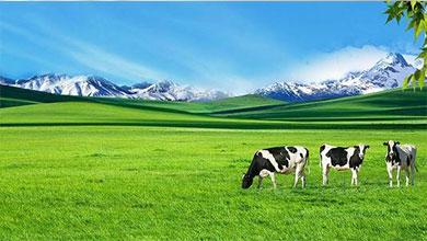 雪兰牛奶公司品牌店案例